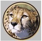 cheetahheadlogo