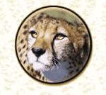 cheetahheadweb
